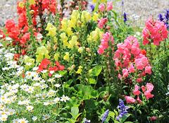 Blumenrabatten im Park