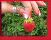 Tiny Harvest