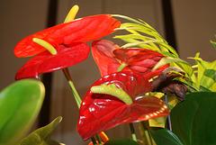 500 - Flor