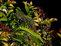 Floraison multicolore…..