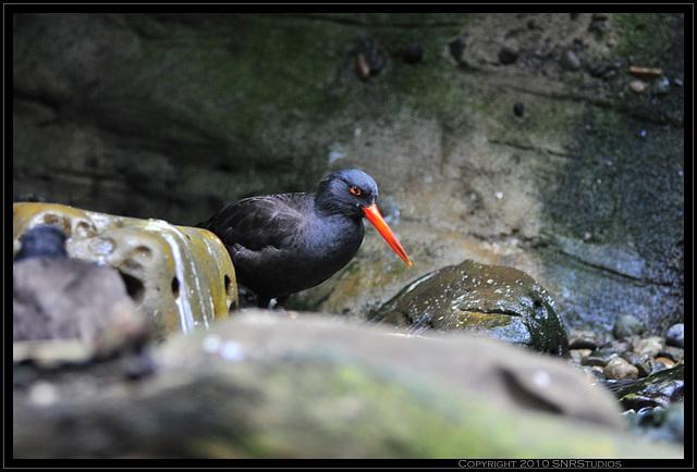 Birds from the Seattle Aquarium