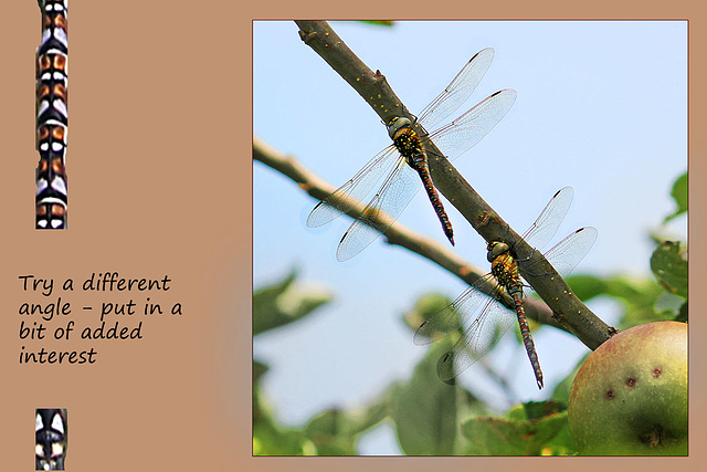 dragonflies three