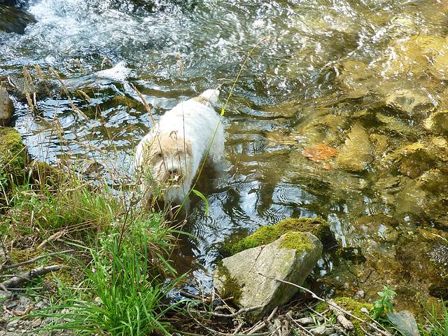 Ah ma rivière ..Enfin de la vraie eau ...douce