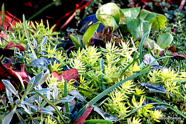 Plant Mixture