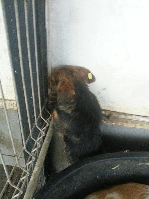 Das Leiden rumänischer Strassenhunde