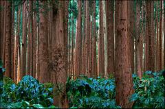 wood_wood_wood