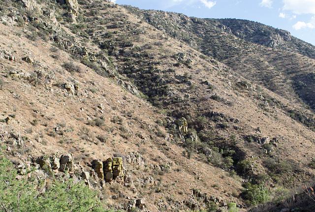 Corondao NF Box Canyon Road #62 (2234)