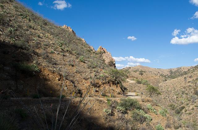 Corondao NF Box Canyon Road #62 (2235)