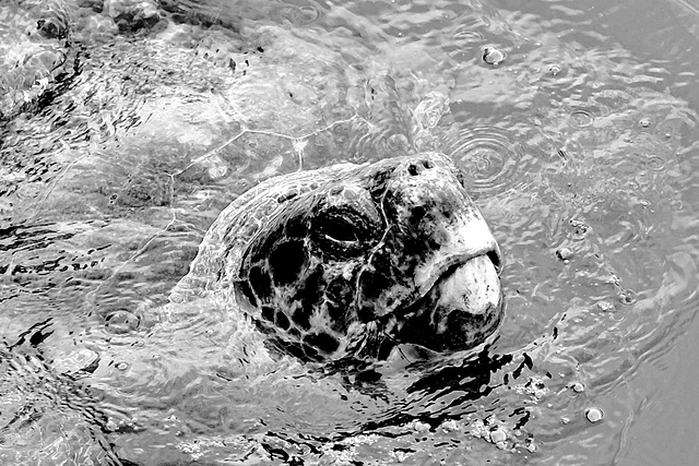 Argostoli Kefalonia Harbour Turtle X Pro 1 2 100% crop mono