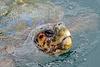 Argostoli Kefalonia Harbour Turtle X Pro 1 2 100% crop