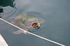 Argostoli Kefalonia Harbour Turtle X Pro 1 2