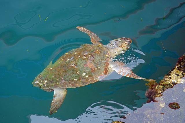 Argostoli Kefalonia Harbour Turtle X Pro 1 1