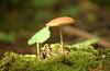 Friston Forest Fungi