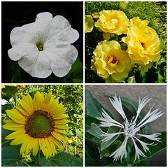 Floroj en mia ĝardeno...Flowers in my garden...