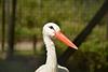 Stork watch