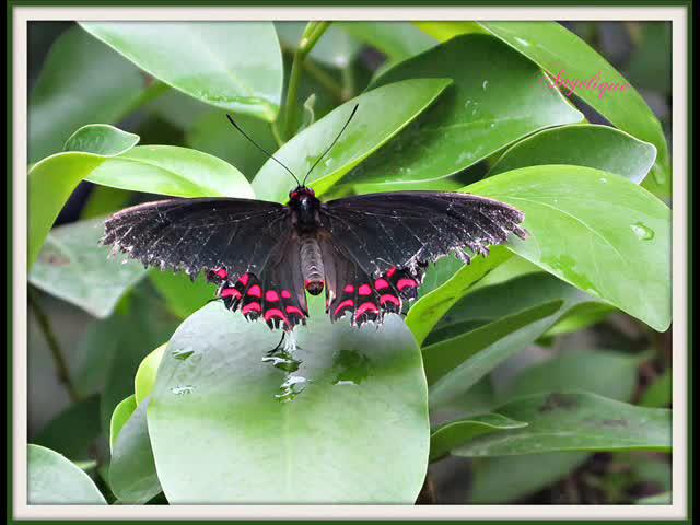 Vidéo papillons