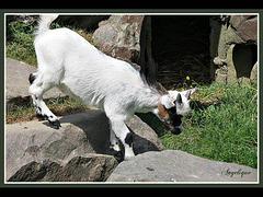 Zoo 1 Mettre le son SVP...