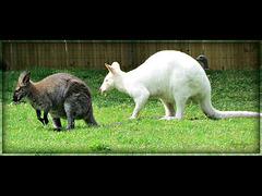 zoo 3 Mettre le son SVP...
