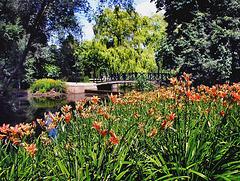 York University gardens.
