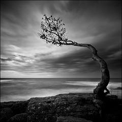 La ténacité du petit arbre