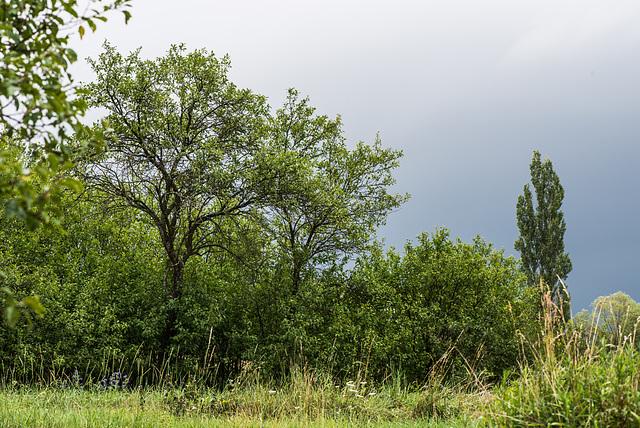 Garten - 20140711