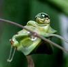 Frog: My weather... ©UdoSm