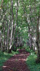 The mystic woods