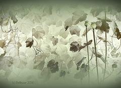 pejzaż z makówkami/ landscape with heads of poppies