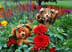 1-10 Project: 2 Happy Bears