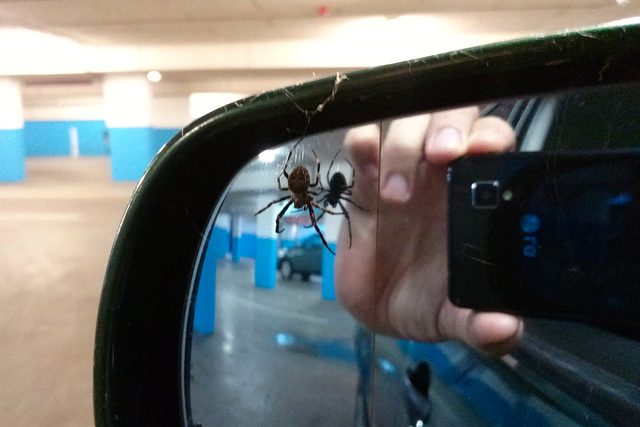 The spider that lives in my wing mirror