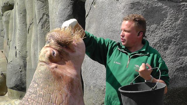 Lecker Fisch für Odin