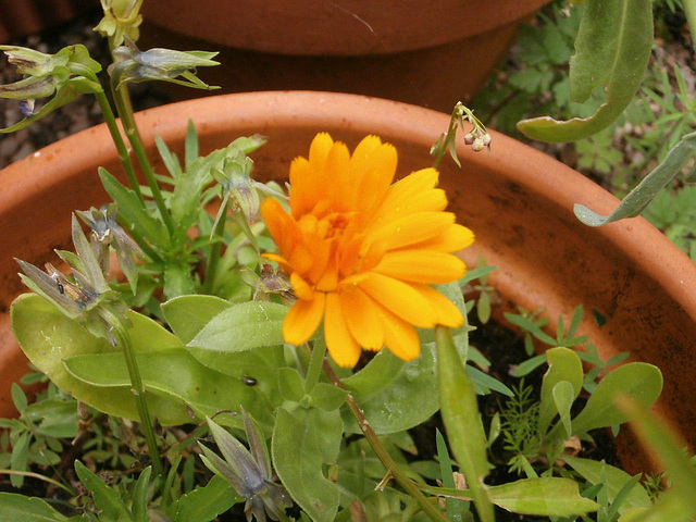 A marigold I didn't know I had