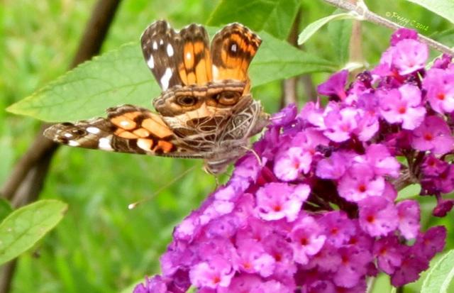 Purple nectar delight -