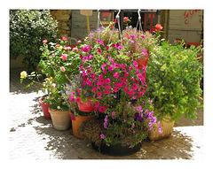 des fleurs pour vous mes amis