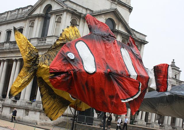 Red fish, yellow fish