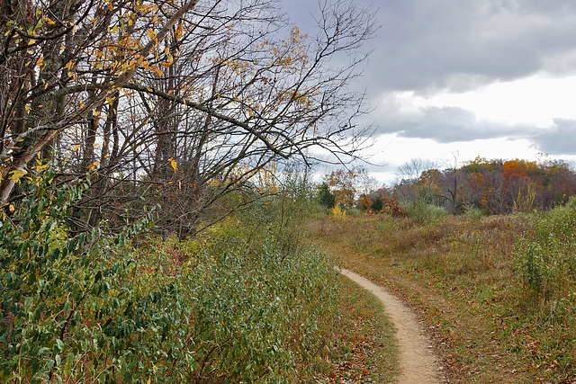 A Curve Along the Path – Kittatinny Valley State Park, Andover, New Jersey