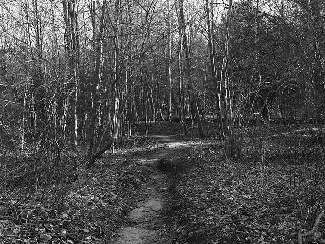 Nipmuck Trail - April