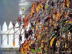 An Autumn Fence Line