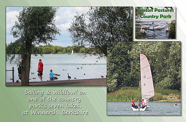 On the lake - Dinton Pastures Country Park - Winnersh -Berkshire - 13.8.2014