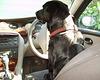 BDD - driver