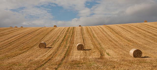 Fields near East Linton