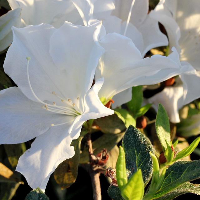 White in sunlight