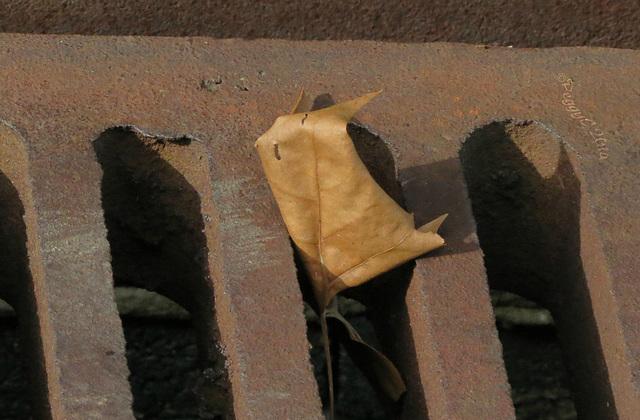 .. last leaf ?