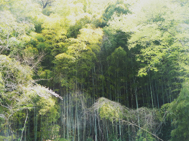 bamboo forest noren town