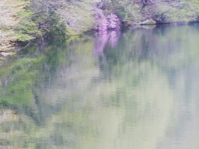 takako-san's pond