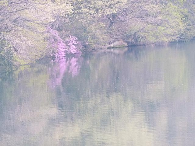takako-san's pond3