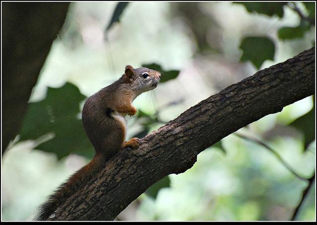 Rackus on a branch
