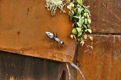 A Metallic Ant –  Le jardin de verre et de métal, Botanical Garden, Montréal, Québec