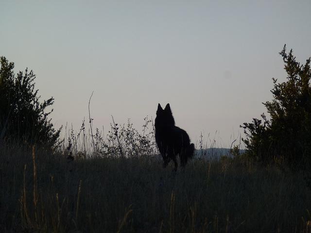 20140912 Fee Forêt Parlatge (20) al