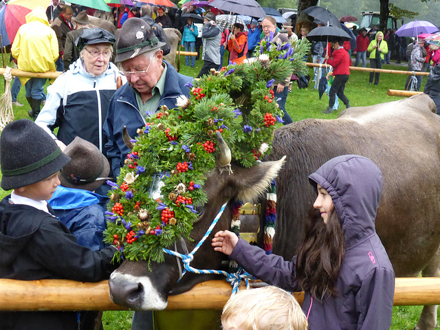 The Kranzkuh (wreath Cow)